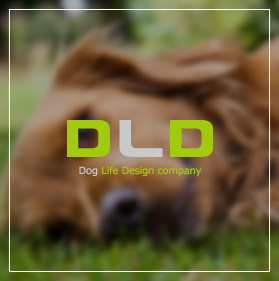 Dog Life Design company
